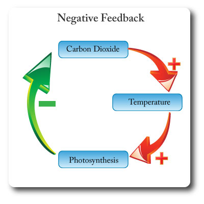 IB environmental systems negative feedback