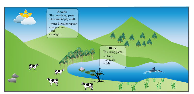 IB environmental systems biotic & abiotic components