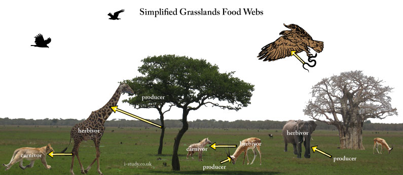 IB environmental systems food webs food chains