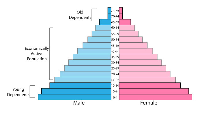 Population pyramid for less developed countries