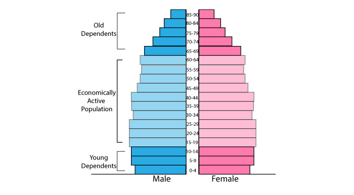 Population pyramid for more developed countries